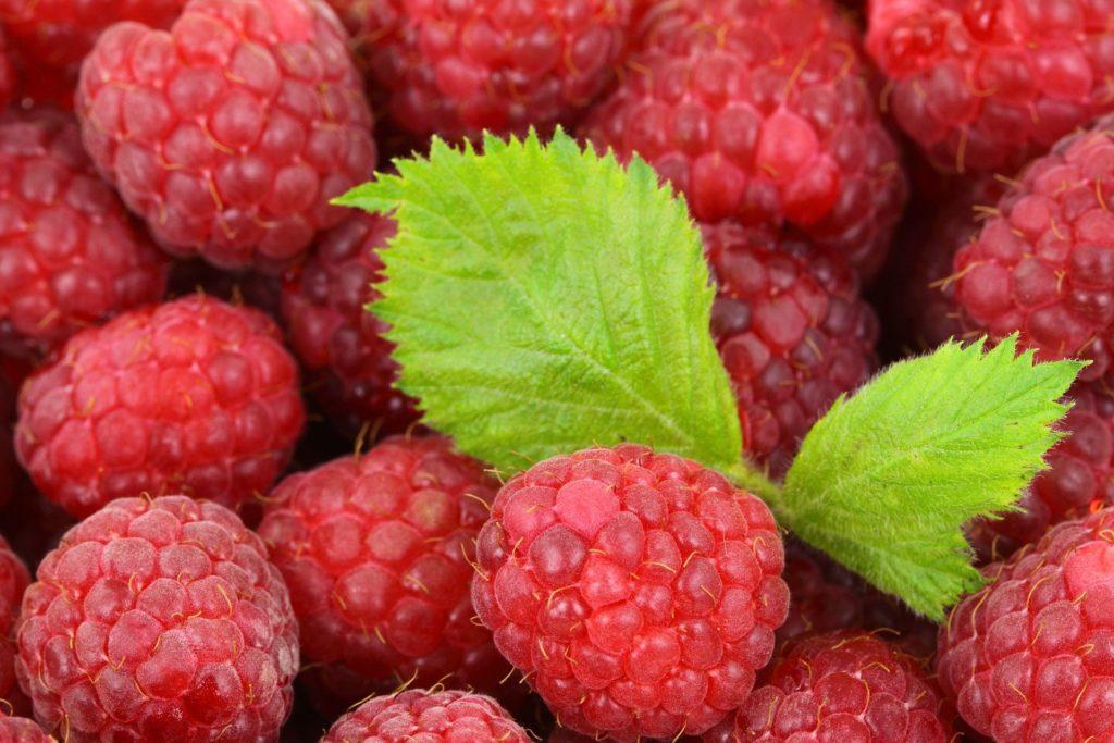 raspberry-2276_1920