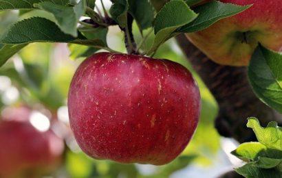 apple-2788616_640