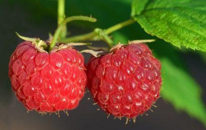 raspberry-3454504_640